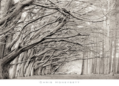 Crystal Grove Prints by Chris Honeysett