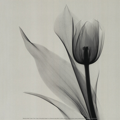 Tulipe Reproduction d'art