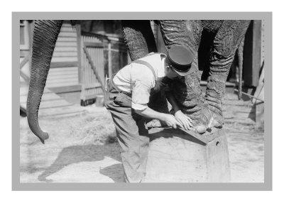 Elephant Pedicure Print
