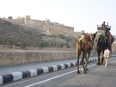 Camel and Elephant Walking Past Amber Fort, Amber, Rajasthan, India, Asia Photographic Print by Annie Owen