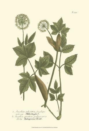 Leaves IV Prints by Johann Wilhelm Weinmann