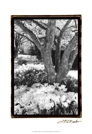 Springtime Garden VI Posters by Laura Denardo