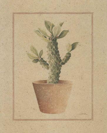 Euphorbia Prints by Laurence David