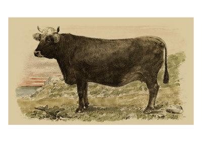 Antique Cow V Prints by Julian Bien