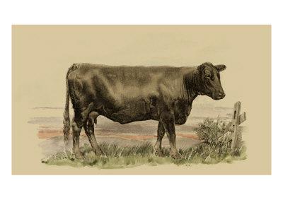 Antique Cow II Prints by Julian Bien