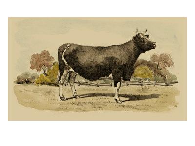Antique Cow VI Print by Julian Bien