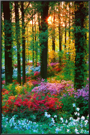 Flower Forest Lamina Framed Poster