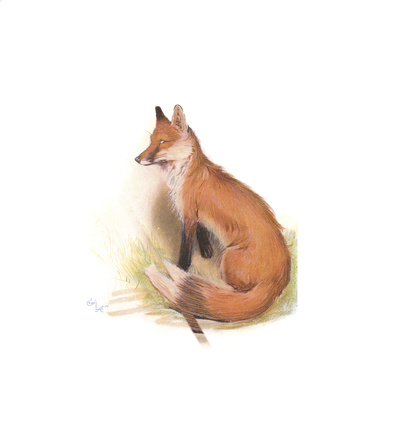 The Fox Premium Giclee Print by Cecil Aldin