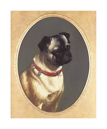 Head Of A Pug Premium Giclee Print by James Ricks