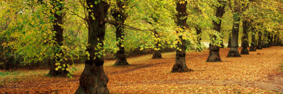 Autumn Trees in a Park, Clumber Park, Nottinghamshire, England Photographic Print by  Panoramic Images