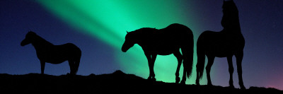 Silhouette of Horses at Dusk, Iceland Photographic Print by  Panoramic Images