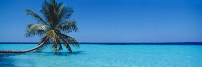 Palm Tree in the Sea, Maldives Photographic Print by  Panoramic Images