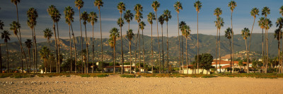 Palm Trees on the Beach, Santa Barbara, California, USA Photographic Print by  Panoramic Images