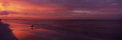 Bird on the Beach, Fort Myers Beach, Estero Island, Lee County, Florida, USA Photographic Print by  Panoramic Images