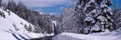 Snow Covered Trees in a Forest, Emigrant Gap, California, USA Lámina fotográfica