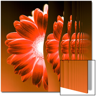 Gerbera Flower Vertical Slivers Print by Winfred Evers