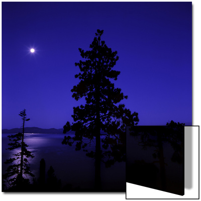 Full Moon in Night Sky over Trees and Lake Tahoe, Nevada, USA Print by Deon Reynolds