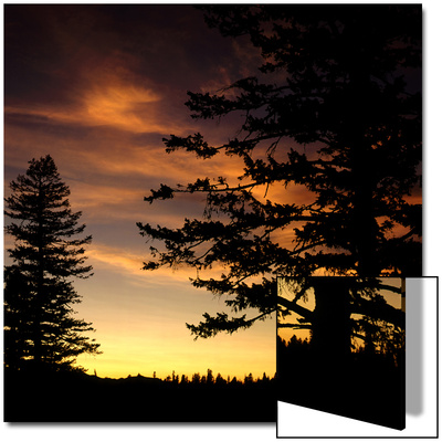 Trees and Clouds in Sky at Sunset, Hells Canyon, Oregon, USA Prints by Deon Reynolds