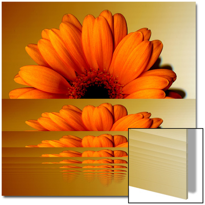 Gerbera Flower as Rising Sun Posters by Winfred Evers