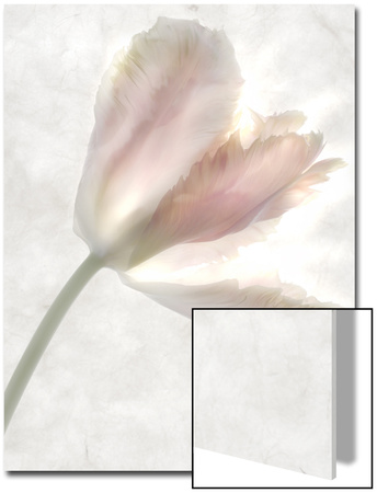 Still Life of a Flower Prints by Joyce Tenneson