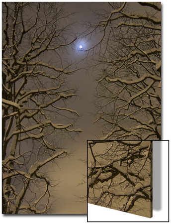 Night Image of Trees Bathed in Artificial Light from City Lights and the Full Moon Posters by John Churchman