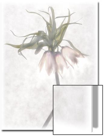 Still Life of Flowers Art by Joyce Tenneson