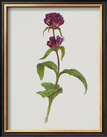 Dreary Purple Gentian Posters by Moritz Michael Daffinger
