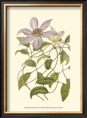 Blossoming Vine III Art by Sydenham Teast Edwards