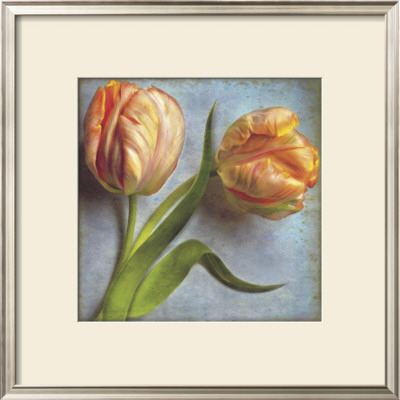 Parrot Tulips II Prints by Sally Wetherby