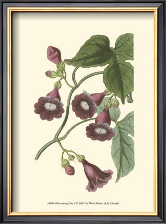 Blossoming Vine V Prints by Sydenham Teast Edwards