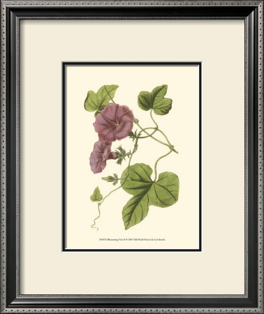 Blossoming Vine II Posters by Sydenham Teast Edwards