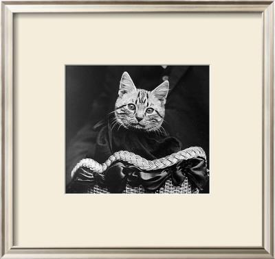 French Tabby Cat Prints by Mesh Gabriella