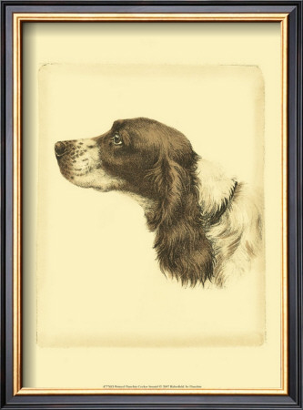 Danchin Cocker Spaniel Print by  Danchin