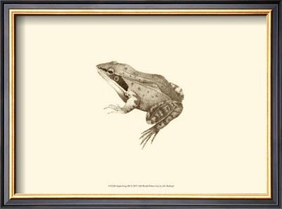 Sepia Frog III Print by J. H. Richard