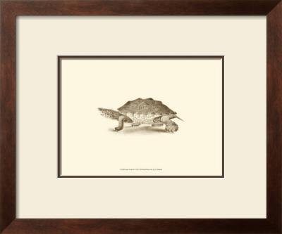 Sepia Turtle II Posters by J. H. Richard