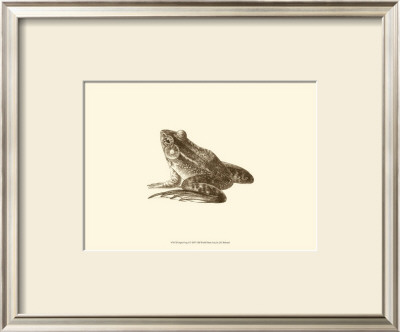 Sepia Frog I Prints by J. H. Richard