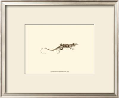 Sepia Lizard II Prints by J. H. Richard