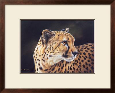 Cheetah Prints by Kim Thompson