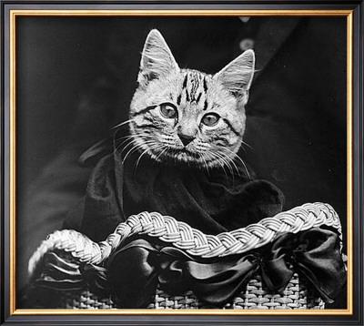 French Tabby Cat Print by Mesh Gabriella