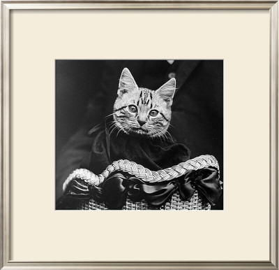 French Tabby Cat Art by Mesh Gabriella