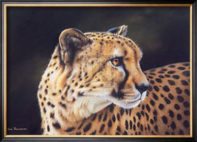 Cheetah Posters by Kim Thompson