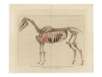 Horse Skeleton Giclée-Druck