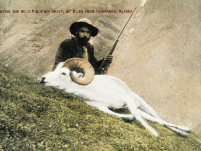 Hunting Wild Big Horn Sheep in Alaska Photographic Print