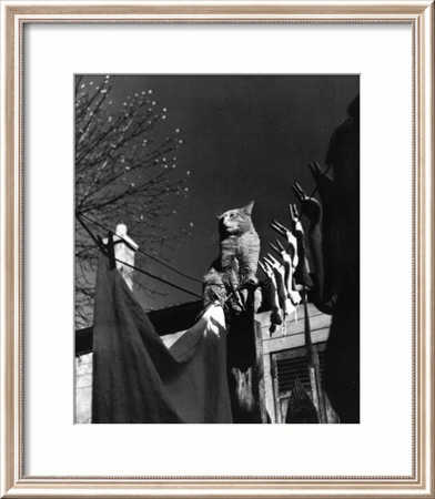 Dans la Cours, c.1954 Framed Art Print