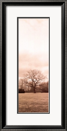Chestnut Tree Framed Art Print