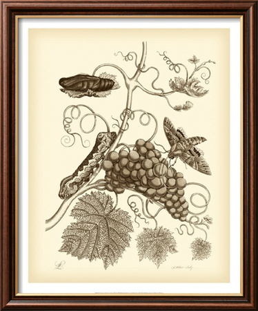 Nature Study in Sepia III Framed Art Print