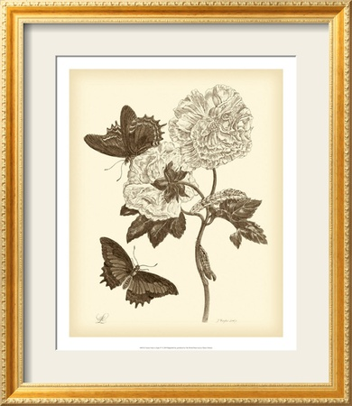 Nature Study in Sepia IV Framed Art Print