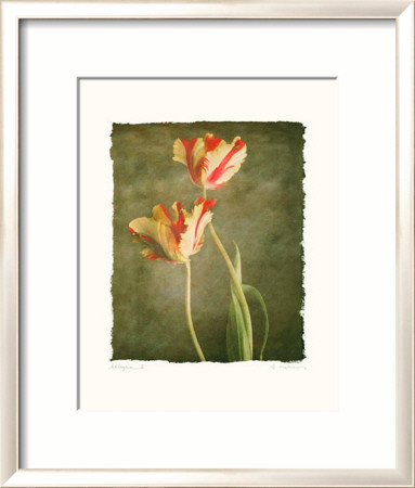 Allegria II Framed Art Print