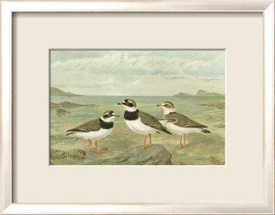 Shore Gathering IV Framed Art Print