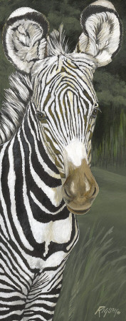 Safari Zebra Posters by Harold Rigsby